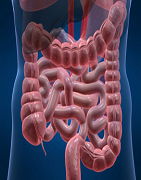 Best Colon Care Products At UAE Supplements
