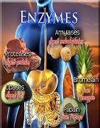 Best Enzymes Products At UAE Supplements